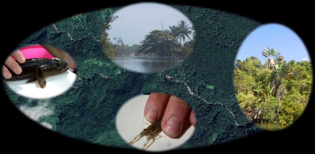 terre-mer-veille.com expertise en mlieu fluvial